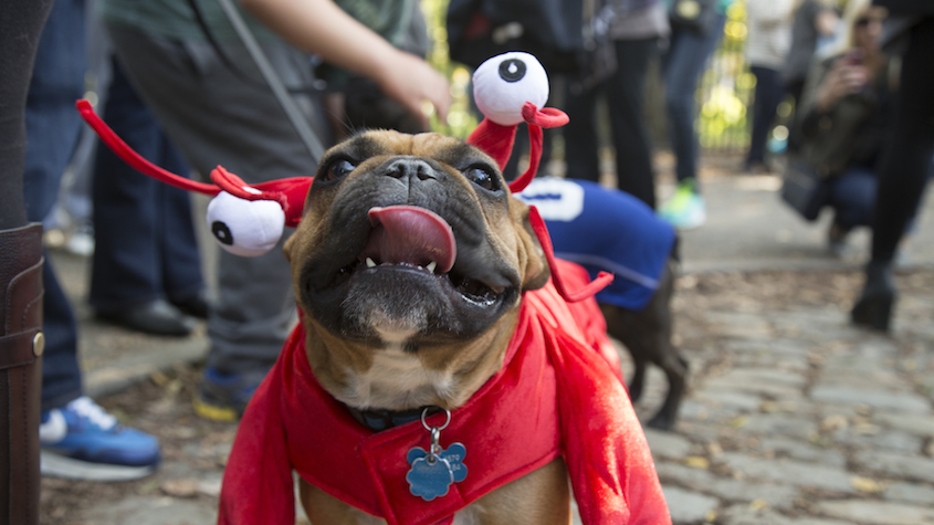 Invention on the Street: Halloween Dog Parade